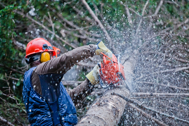 Picture of employee with safety gear on cutting up a tree in the winter at a customers home in Kansas City, KS